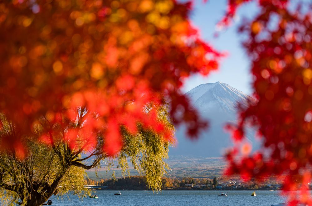 เทศกาลใบไม้เปลี่ยนสีที่คาวากุจิโกะ (Fujikawaguchiko Autumn Leaves Festival)