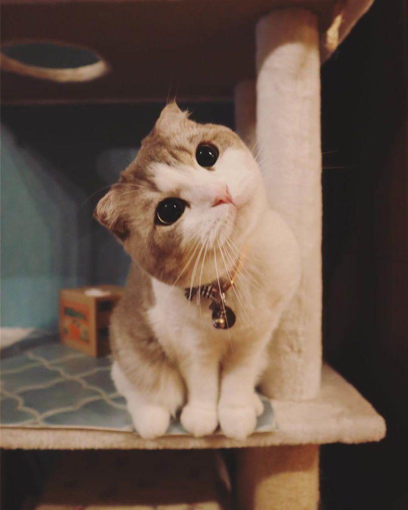 """นิทรรศการภาพถ่ายแมว """"Nyanpaku Neko Expo"""""""