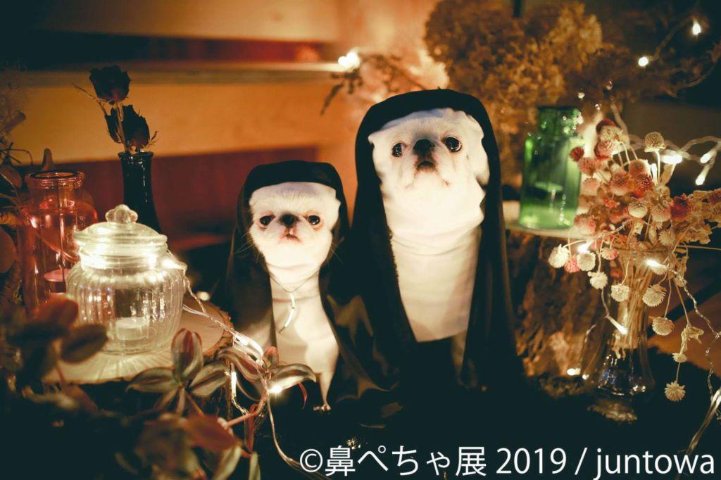 งาน Hanapecha Kai 2019 เพื่อคนรักน้องหมาตัวเปี๊ยก
