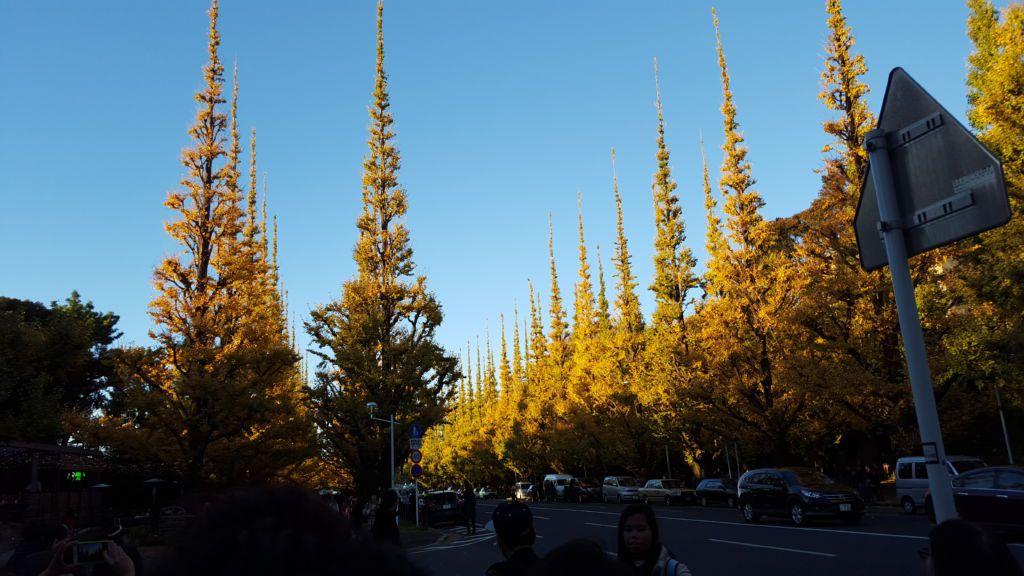 ถนนต้นแปะก๊วยที่สวนเมจิจิงกูไกเอ็น (Meiji Jingu Gaien)