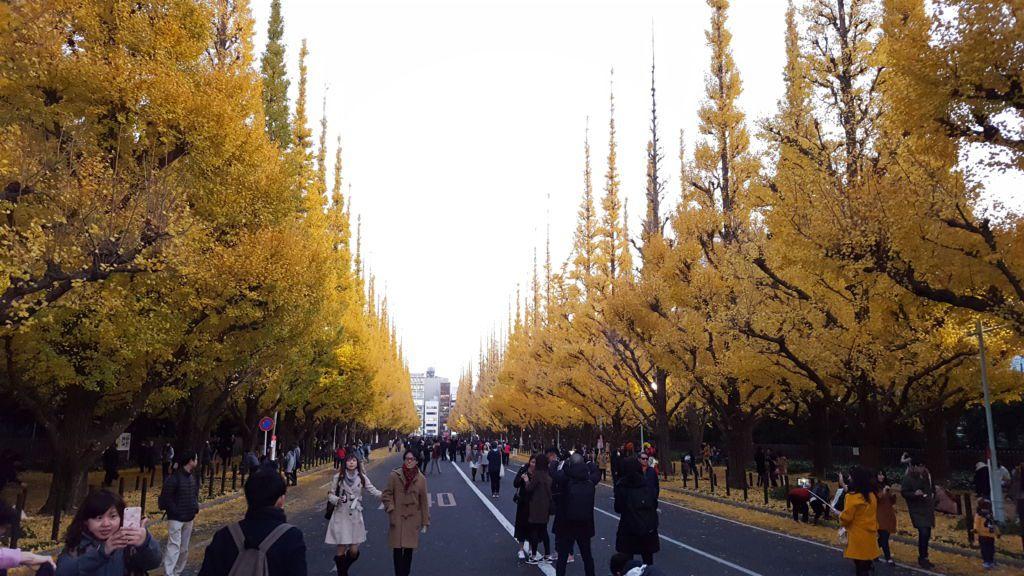 จุดชมต้นเเปะก๊วยสวนเมจิจิงกูไกเอ็น (Meiji Jingu Gaien)