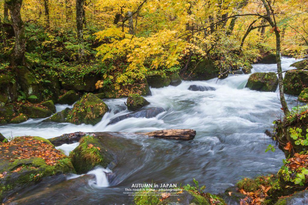 โออิระเสะ (Oirase Stream) เส้นทางเดินป่าชมลำธารน้ำและใบไม้เปลี่ยนสี