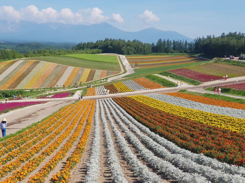 ทุ่งดอกไม้หลากสี ณ สวนชิกิไซโนะโอกะ (Shikisai No Oka) ฮอกไกโด