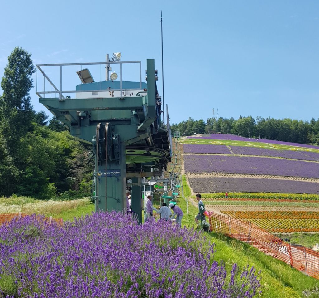 นั่งกระเช้าชมทุ่งลาเวนเดอร์ที่ Choei Lavender farm เมืองนะกะฟุราโนะ (Nakafurano)