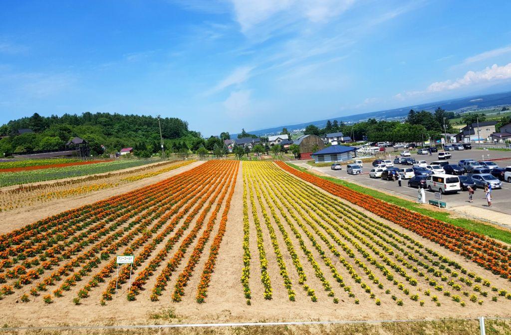 ทุ่งดอกไม้ที่ Choei Lavender farm เมืองนะกะฟุราโนะ (Nakafurano)