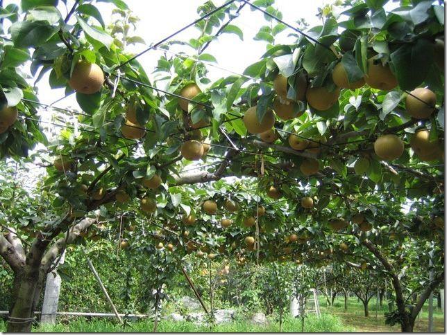 ชี้เป้า 5 สวนผลไม้บุฟเฟ่ต์ใกล้โตเกียวให้คุณฟินได้ไม้อั้น