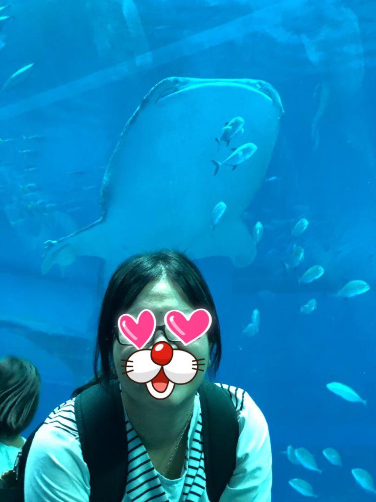 ชมฉลามวาฬที่ Okinawa Churaumi Aquarium โอกินาว่า
