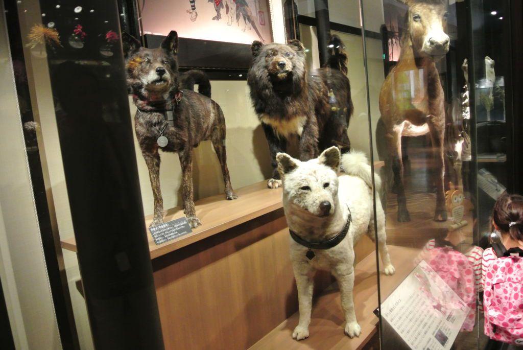 พิพิธภัณฑ์ธรรมชาติและวิทยาศาสตร์แห่งชาติ (National Museum of Nature and Science) ของญี่ปุ่น