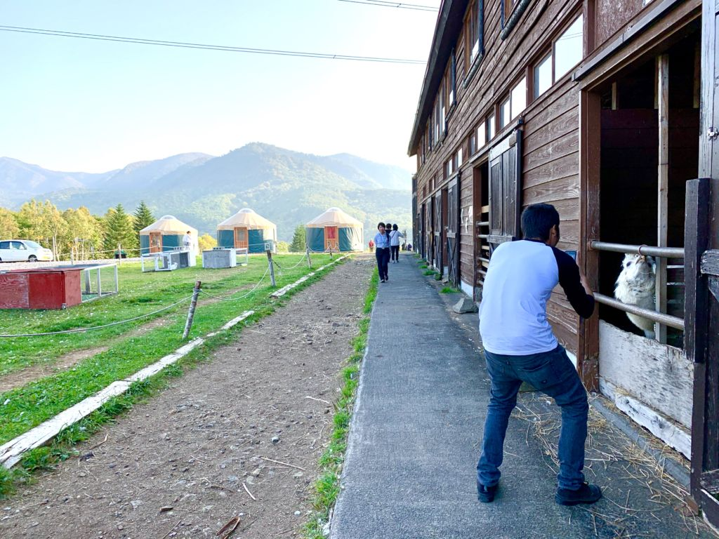 Hopi Hills Farm Hokkaido ฟาร์ม คาเฟ่ โฮมสเตย์สไตล์มองโกเลียในฮอกไกโด