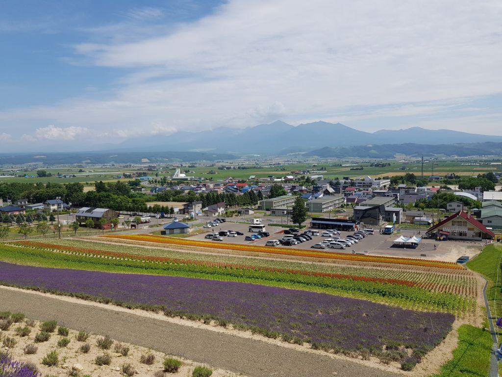 ทุ่งลาเวนเดอร์ที่ Choei Lavender farm เมืองนะกะฟุราโนะ (Nakafurano)