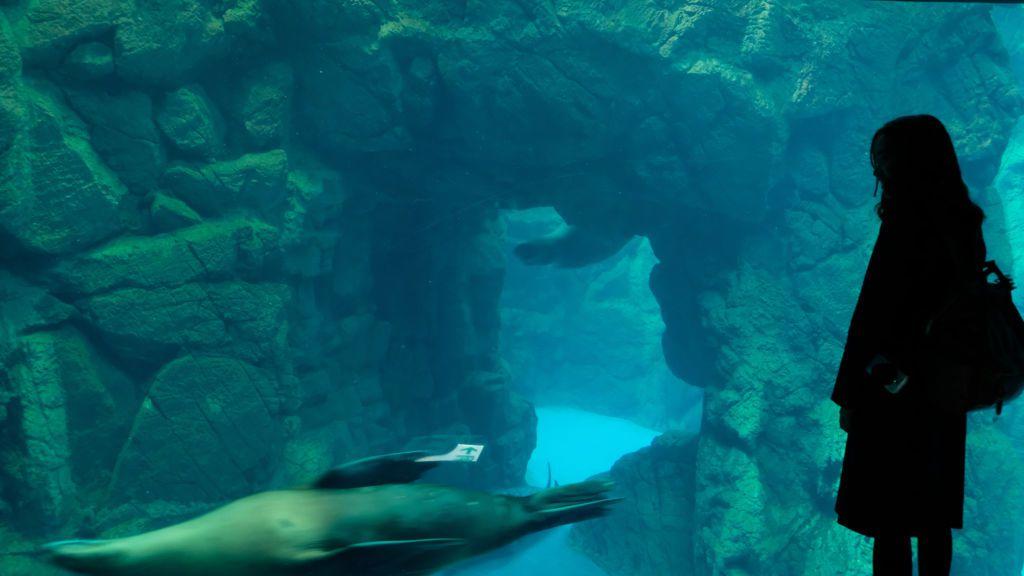 พิพิธภัณฑ์สัตว์น้ำ KAIYAKAN Aquarium