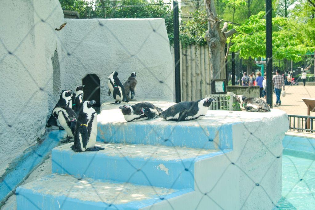ชมสัตว์ญี่ปุ่นและสัตว์หายากทั่วโลก ที่สวนสัตว์อุเอโนะ