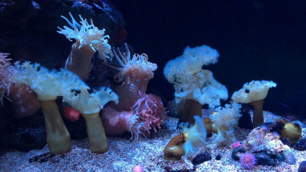พิพิธภัณฑ์สัตว์น้ำ KAIYAKAN Aquarium โอซาก้า
