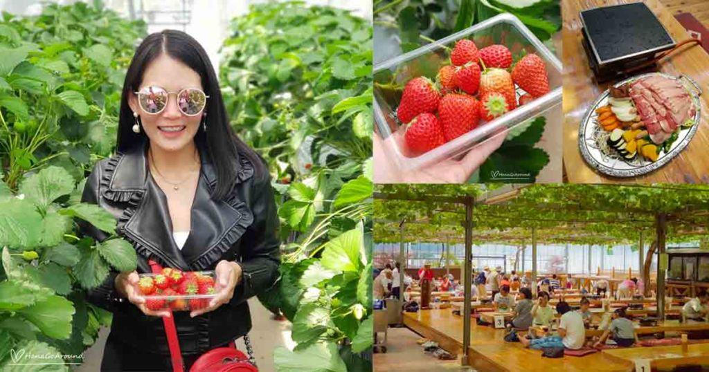 เก็บสตรอเบอรี่สดๆ พร้อมกินปิ้งย่างใกล้โตเกียว @Komatsuzawa Farm เมืองจิจิบุ ไซตามะ