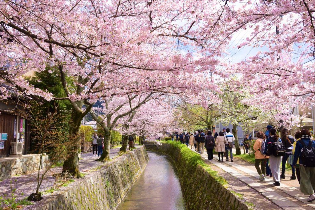 ถนนสายนักปราชญ์ (Philosopher's Path | 哲学の道) 15 จุดชมซากุระต้องห้ามพลาดในเกียวโต (Kyoto)