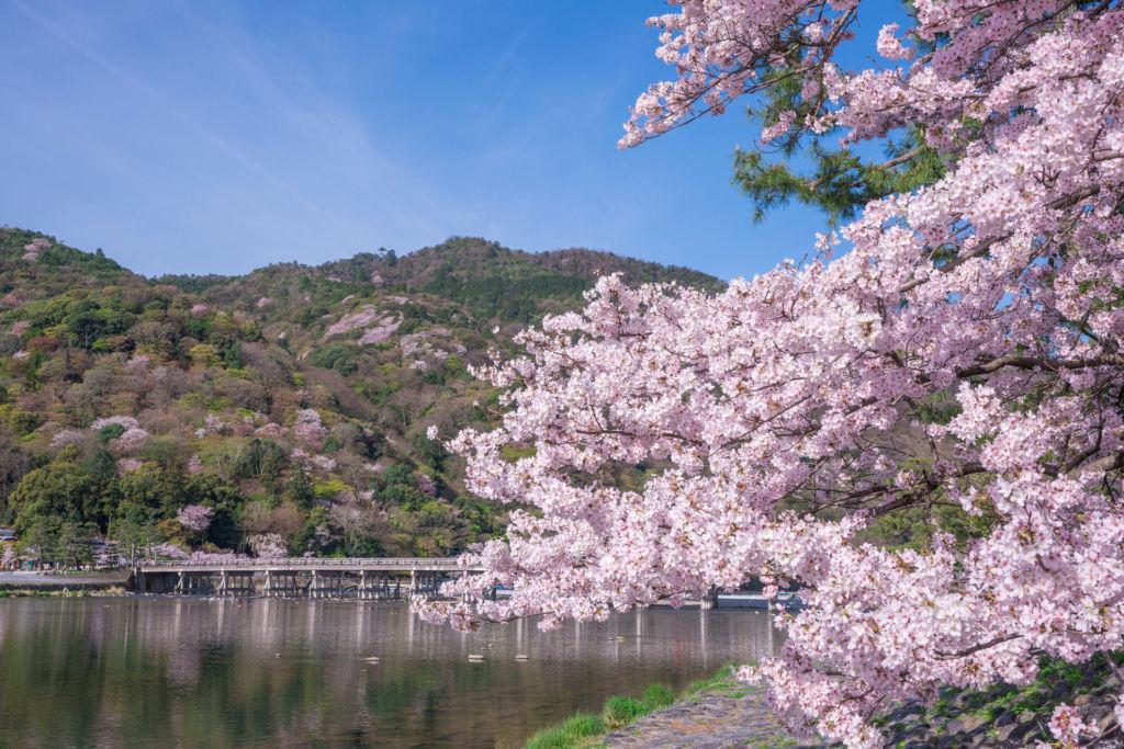 อะราชิยาม่า (Arashiyama | 嵐山) 15 จุดชมซากุระต้องห้ามพลาดในเกียวโต (Kyoto)