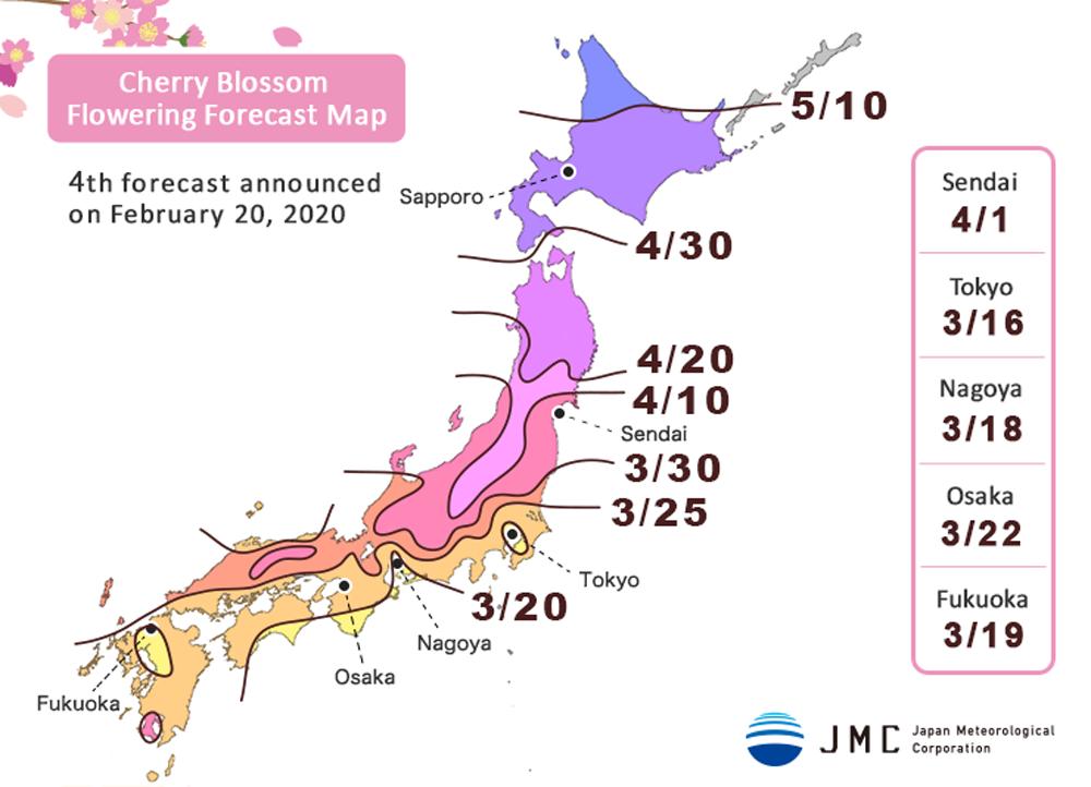 [อัพเดท] พยากรณ์การบานของซากุระ 2020 ครั้งที่ 4 ซากุระบานเร็วขึ้นทั่วประเทศ