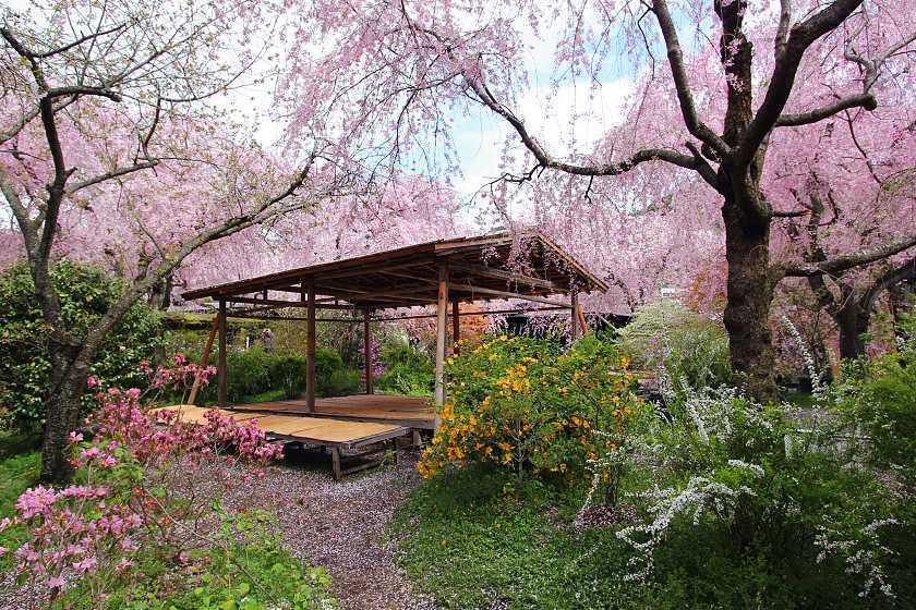 สวนฮาราดานิเอน (Haradani-en Garden | 原谷園) 15 จุดชมซากุระต้องห้ามพลาดในเกียวโต (Kyoto)