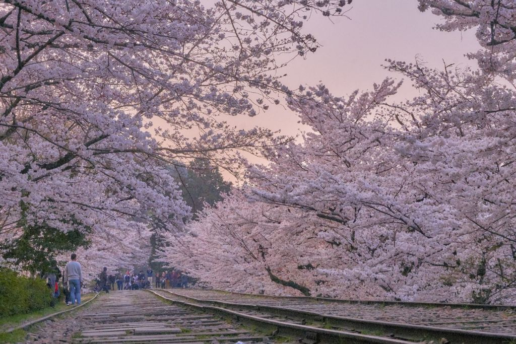 เคอาเกะ อินไคลน์ (Keage Incline | 蹴上インクライン) 15 จุดชมซากุระต้องห้ามพลาดในเกียวโต (Kyoto)