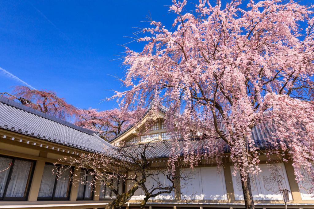 วัดไดโกจิ (Daigoji Temple | 醍醐寺) 15 จุดชมซากุระต้องห้ามพลาดในเกียวโต (Kyoto)