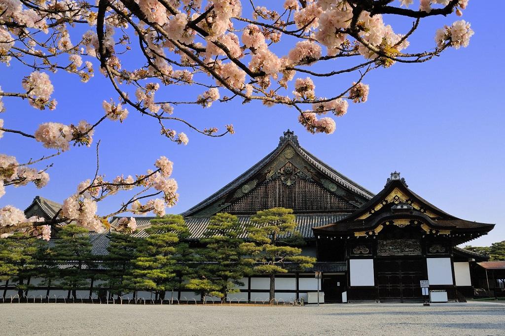 ปราสาทนิโจ (Nijo Castle | 二条城) 15 จุดชมซากุระต้องห้ามพลาดในเกียวโต (Kyoto)