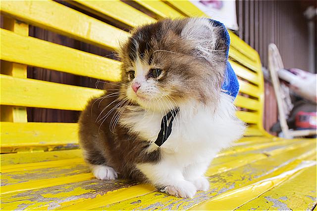 """ว่าที่ """"นายสถานีแมว"""" ตัวใหม่! ที่สถานีรถไฟ Ashinomaki-Onsen ฟุกุชิม่า"""