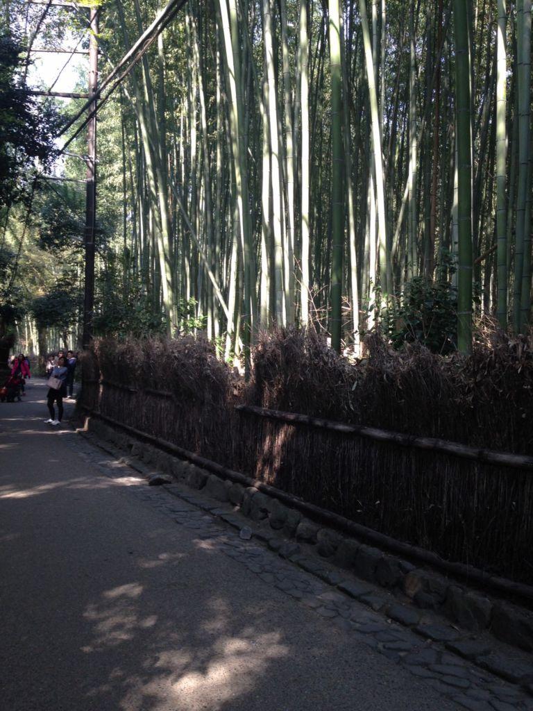 ป่าไผ่อาราชิยามะ(Arashiyama Bamboo Groves)