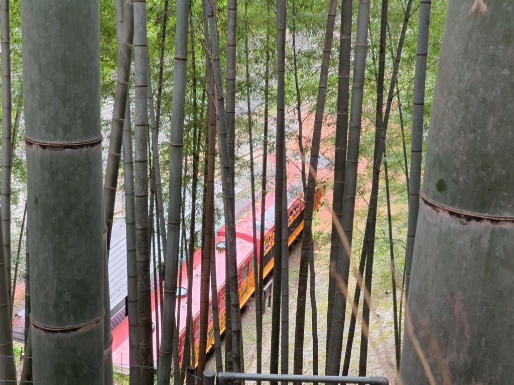 สวนป่าไผ่อาราชิยาม่า Arashiyama