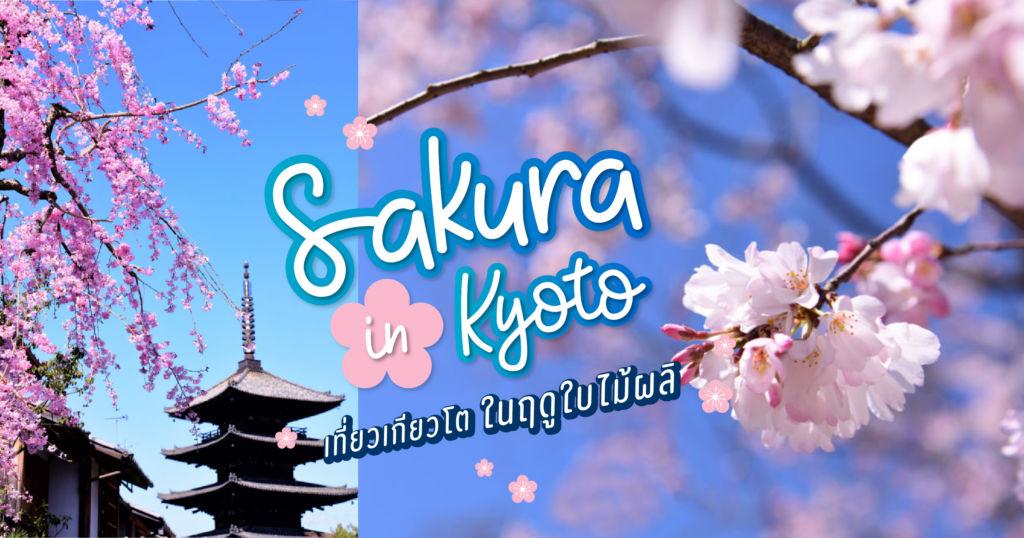 Sakura in Kyoto เที่ยวเกียวโตในฤดูใบไม้ผลิ