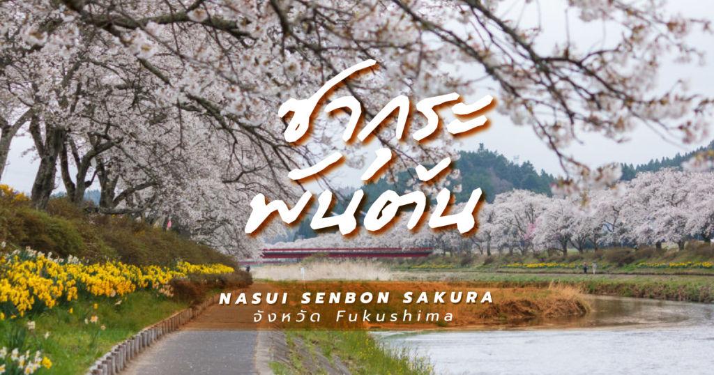 ซากุระพันต้นที่ Nasui Senbon Sakura จังหวัด Fukushima
