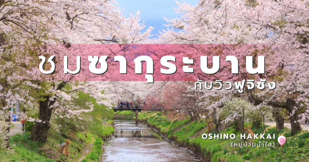 ชมซากุระบานไปพร้อมๆ กับวิวฟูจิซัง ที่ Oshino Hakkai (หมู่บ้านน้ำใส)