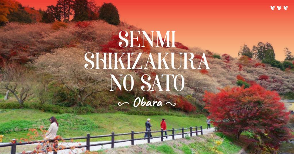 พาเที่ยว Obara ชื่นชมใบไม้เปลี่ยนสี พร้อมกับ ซากุระ @ Senmi Shikizakura no Sato