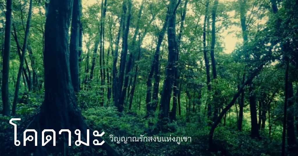 โคดามะ วิญญาณรักสงบแห่งภูเขา