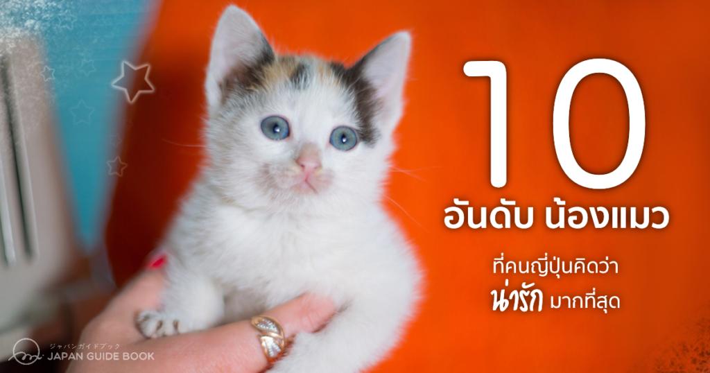 10 อันดับ น้องแมวที่คนญี่ปุ่นคิดว่าน่ารักมากที่สุด