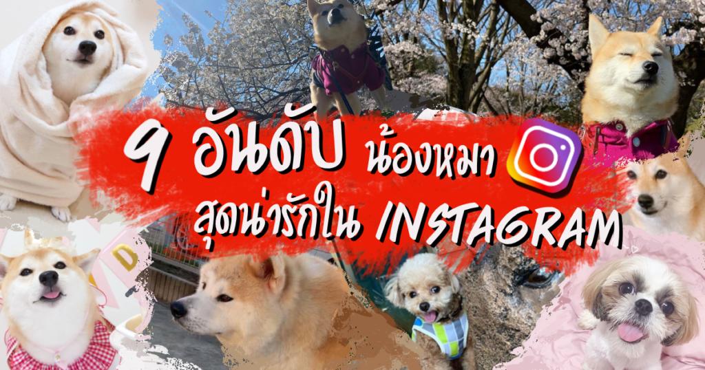 9 อันดับน้องหมาในญี่ปุ่นสุดน่ารัก ผู้โด่งดังบนโลกโซเชียล Instagram 🐶🐶