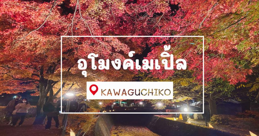อุโมงค์เมเปิ้ลในยามค่ำคืน ที่ Kawaguchiko