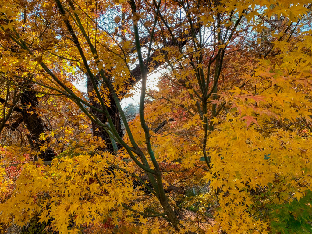 ใบไม้เปลี่ยนระหว่างทางแวะเดินไป Ropway