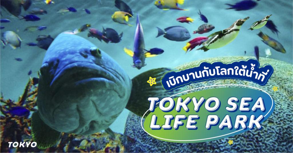 เบิกบานกับโลกใต้น้ำที่พิพิธภัณฑ์ Tokyo Sea Life Park