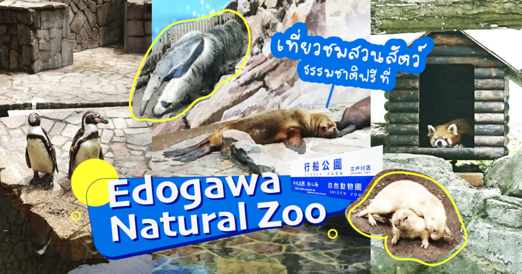 เที่ยวชมสวนสัตว์ธรรมชาติฟรี ที่ Edogawa Natural Zoo